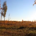 Осенне болото